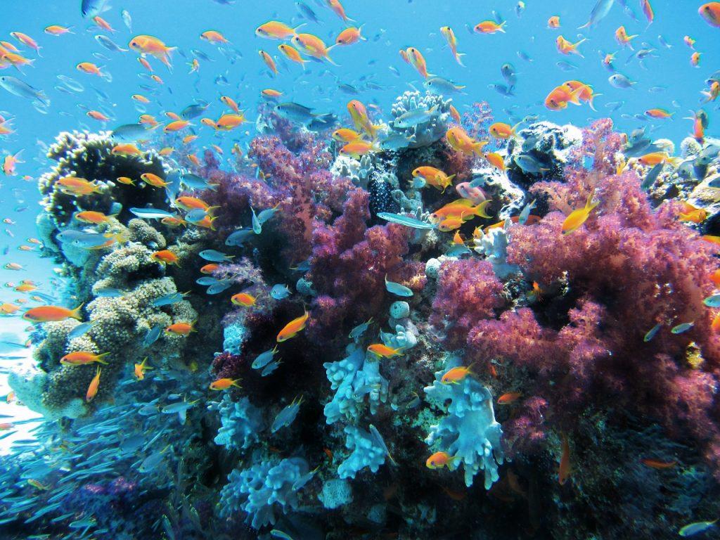 prodotti chimici e coralli
