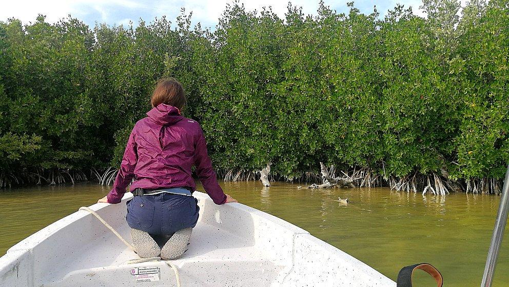 Escursione in barca Rio Lagartos