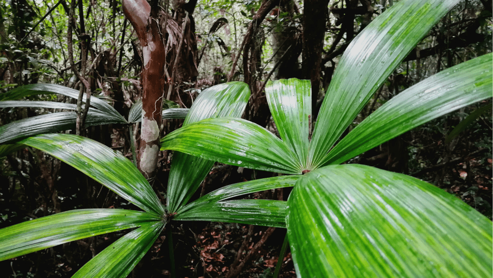 Giungla Calakmul (1)