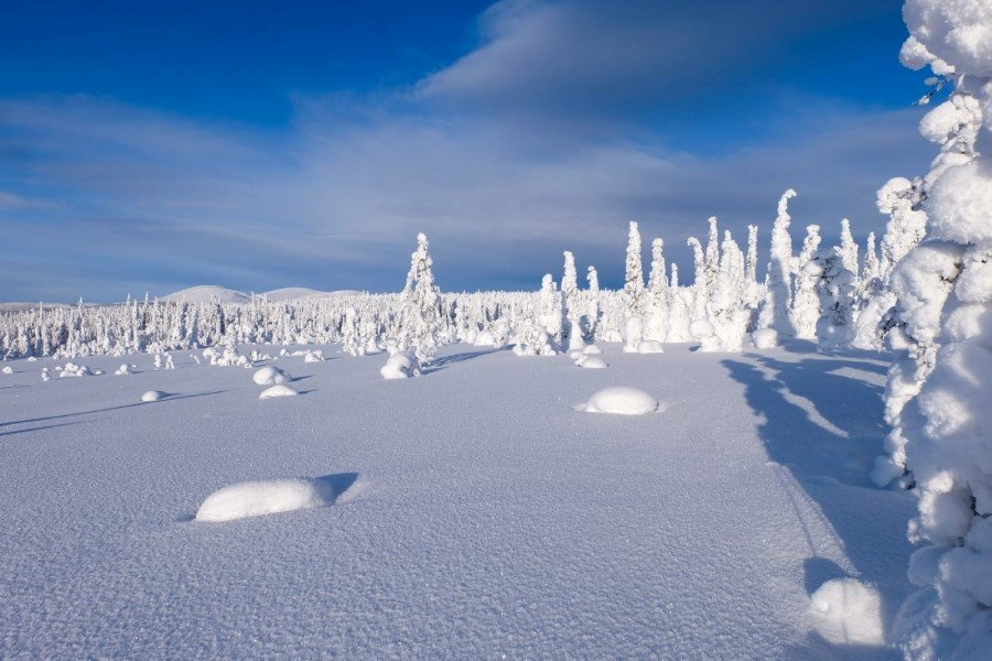 Taiga ghiacciata in Lapponia