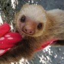 Volontariato con animali in Costa Rica – Turismo Responsabile