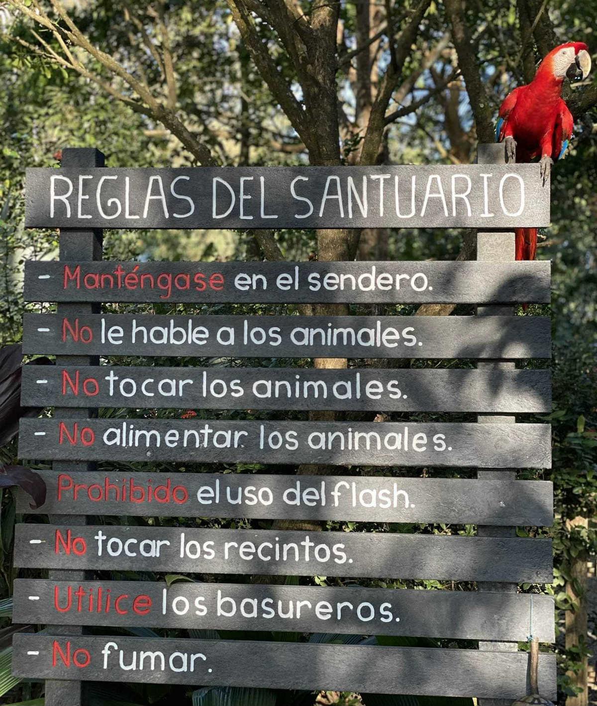 Regole centro serio volontariato con animali Costa Rica