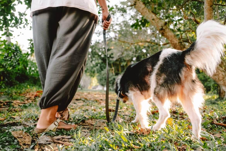 Volontariato cani Asia