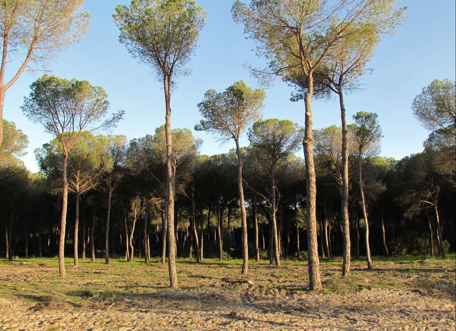 Parco nazionale Donana - Andalusia