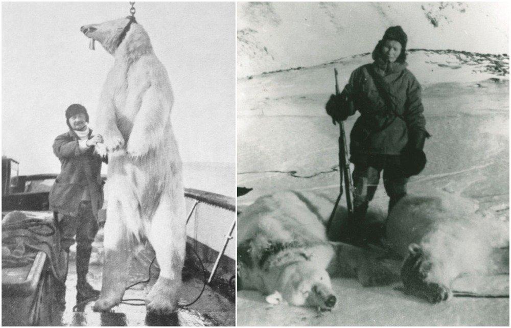 Caccia agli orsi polari