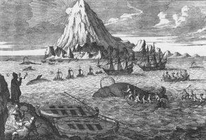 Caccia alle Balene - Svalbard