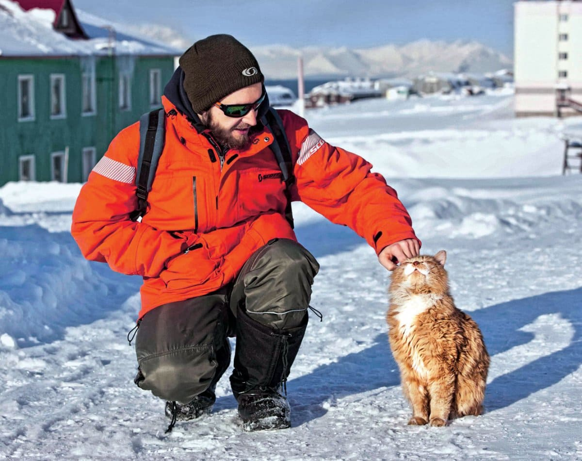 Gatto alle Svalbard, Norvegia