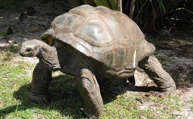 Tartaruga gigante Seychelles